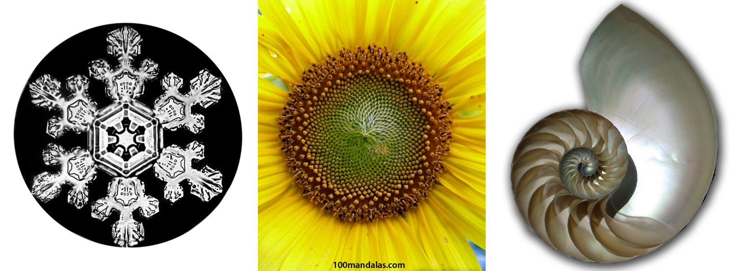 What is a mandala how to draw mandalas and the 100 mandalas challenge with kathryn costa - Mandala nature ...